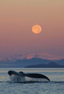 Grandi vette - Monte Mckinley-Alaska